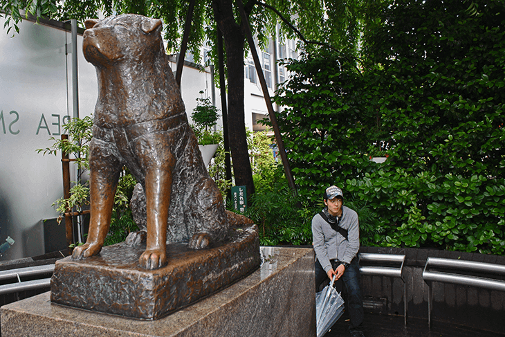 Where to Stay in Tokyo Hachiko