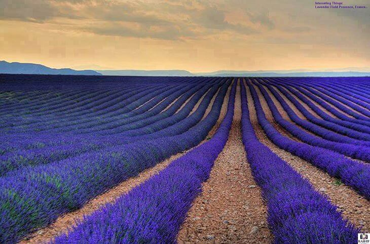 Best Time to Visit Provence, France