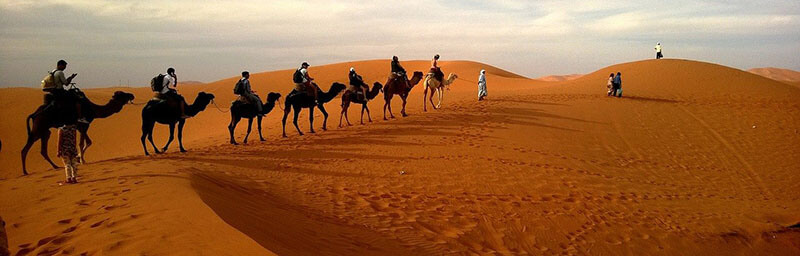 Ride a camel grancanaria
