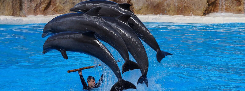Best thing to do spend a day at Loro Parque